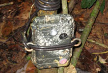 One of the camera traps installed to capture footages of rhino